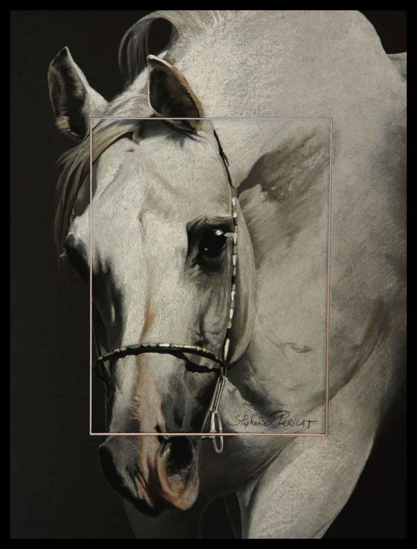 Amoroso de Salvadora, étalon arabe (arabian stallion) - 30x40cm - AV for sale