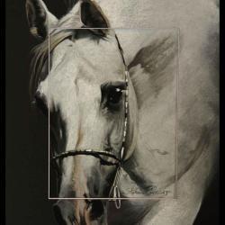 Amoroso de Salvadora, étalon arabe (arabian stallion) - 30x40cm