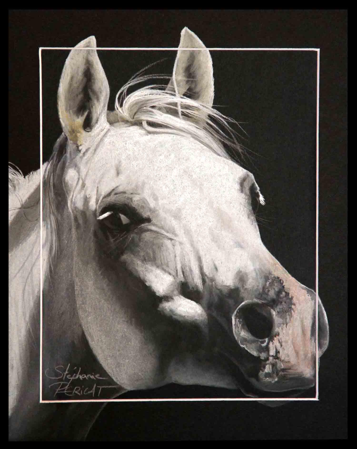 Amoroso de Salvadora, étalon arabe(arabian stallion) - 24x30cm