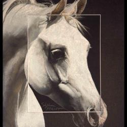 Amoroso de Salvadora, étalon arabe - 30x40cm