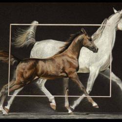 Arabian mare and foal - 20x30cm - AV for sale