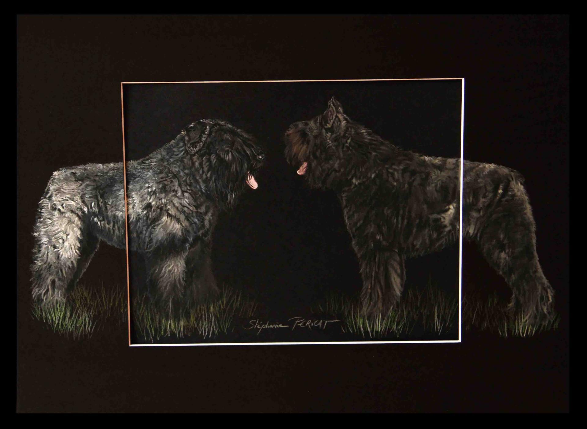 BOUVIERS DES FLANDRES, gabin et ugo - pastel sec (soft pastel) - 40x50cm
