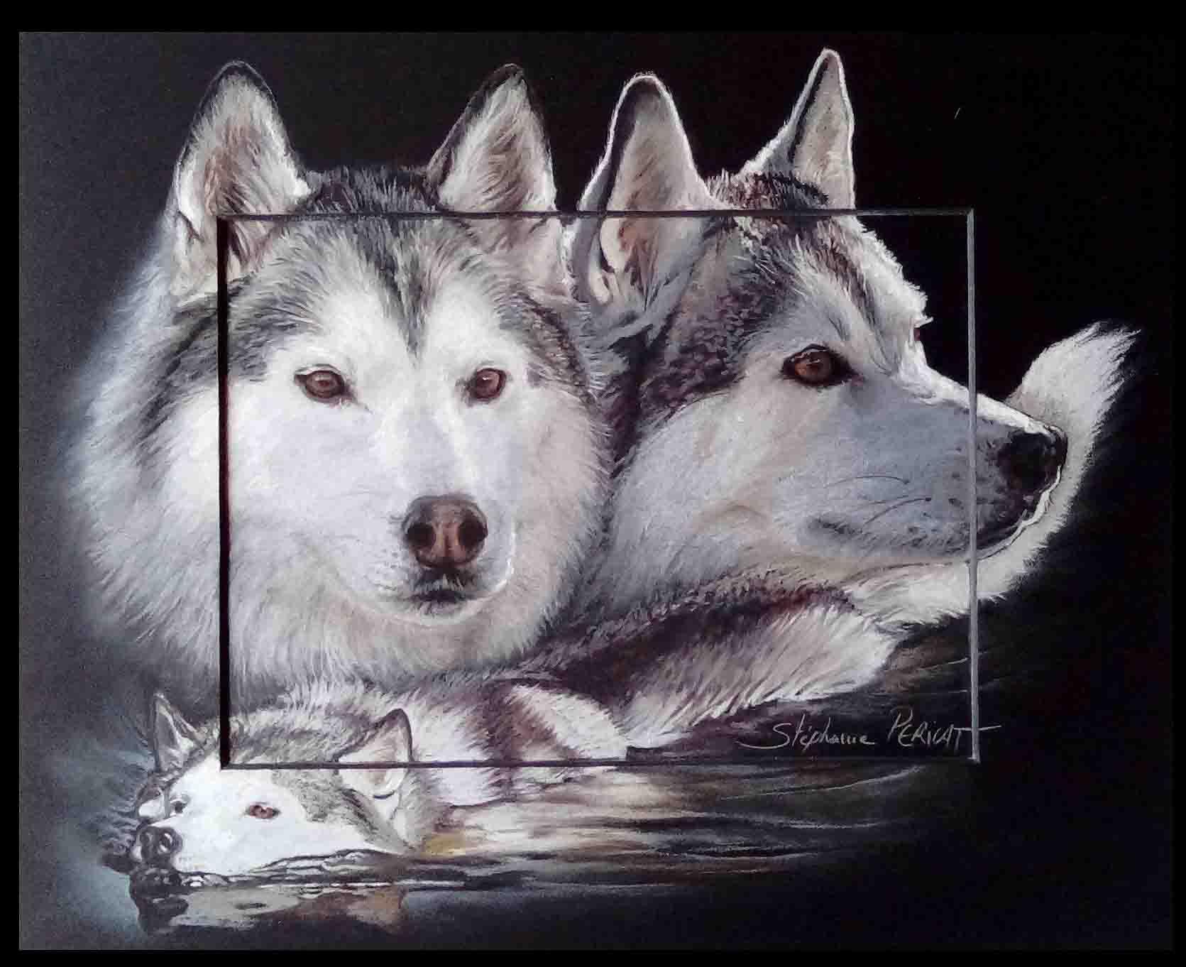 Luna, femelle husky - pastel sec (soft pastel) - 24x30cm - merci à ses propriétaires pour leur confiance