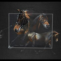 CONRAD (private stallion) - pastel sec (soft pastel) - 40x50cm -  A V for sale