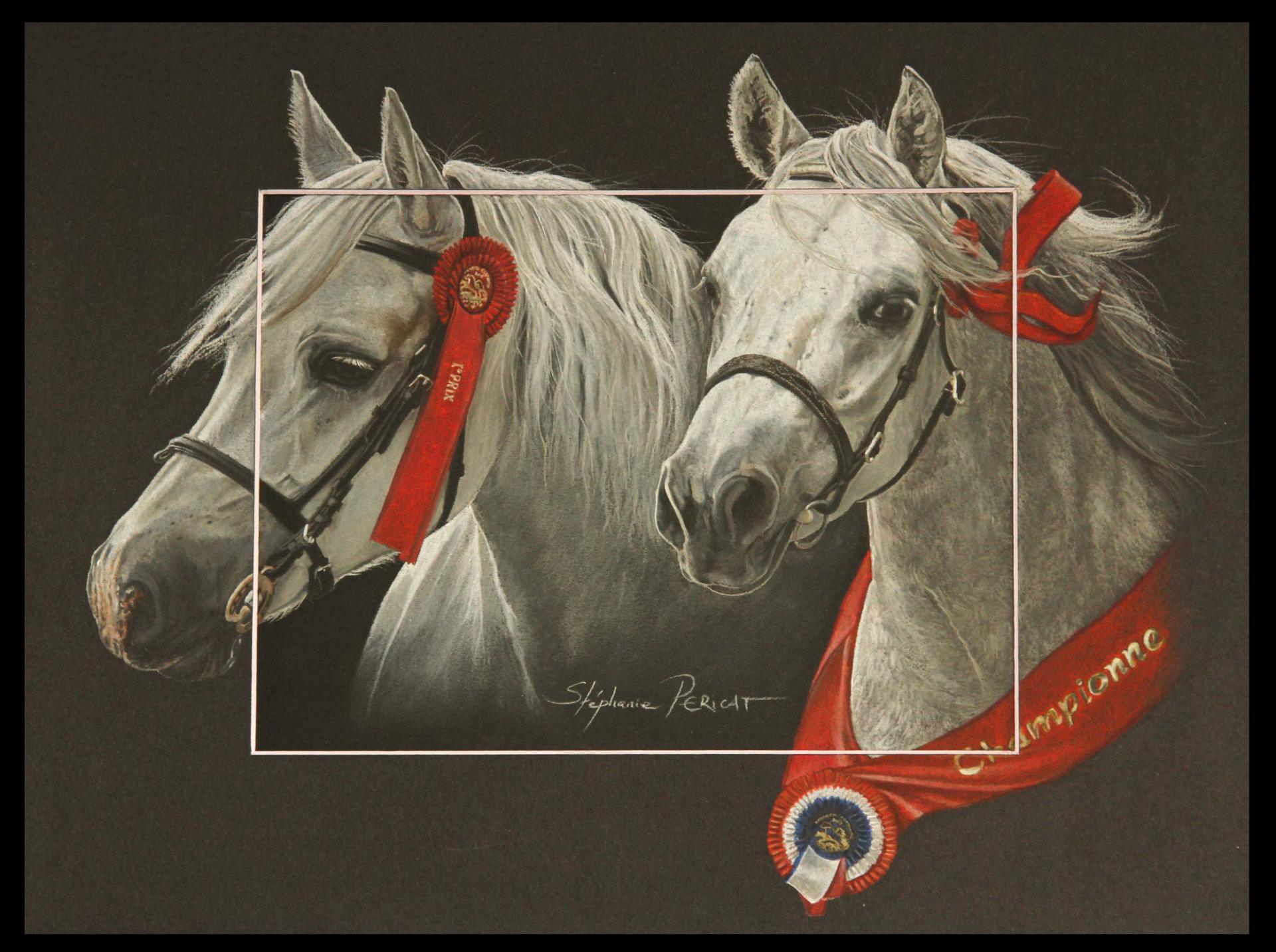 COURT & EMBER, mère et fille connemaras (connemara mother and filly) - pastel sec (soft pastel) - 30x40cm