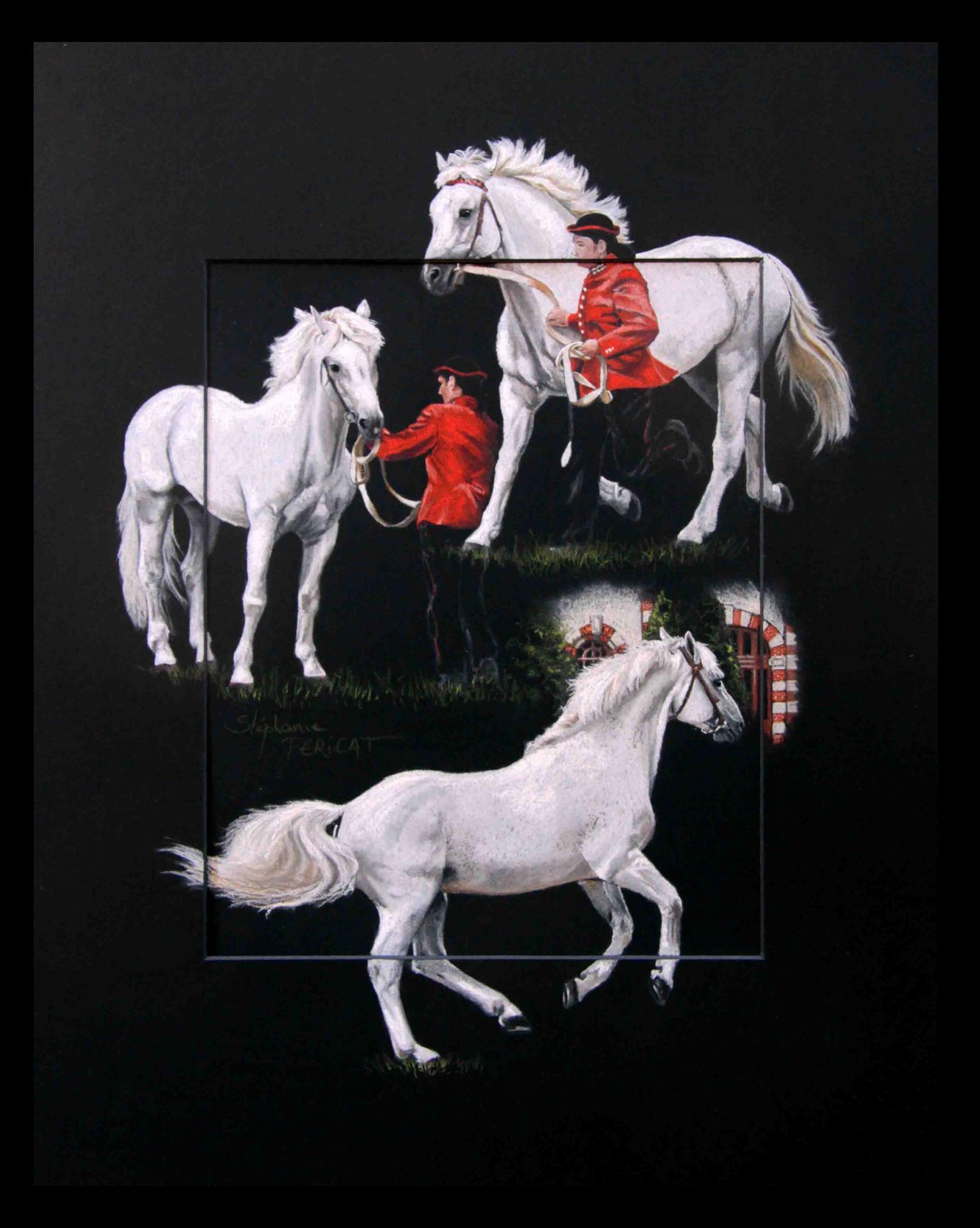 CYRANO PONDI, étalon national connemara - pastel sec(soft pastel) - 40x50cm