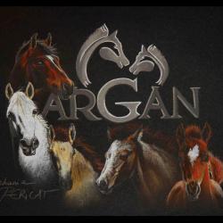 ELEVAGE D'ARGAN de Lorjanie Lapeyre (85) poneys connemaras - pastel sec (soft pastel) - 13x18cm