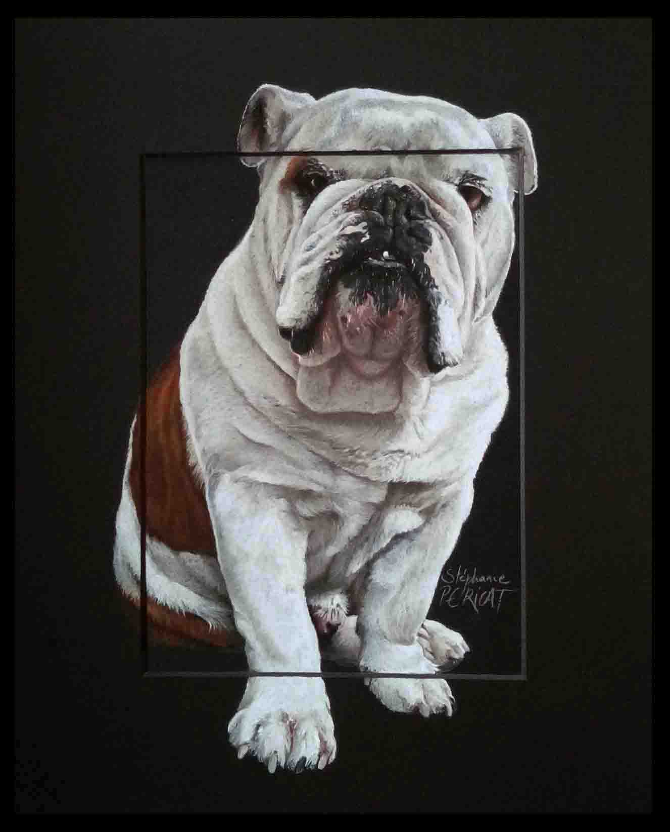 BULLDOG ANGLAIS , GINO (english bulldog) - pastel sec (soft pastel) -  24x30cm