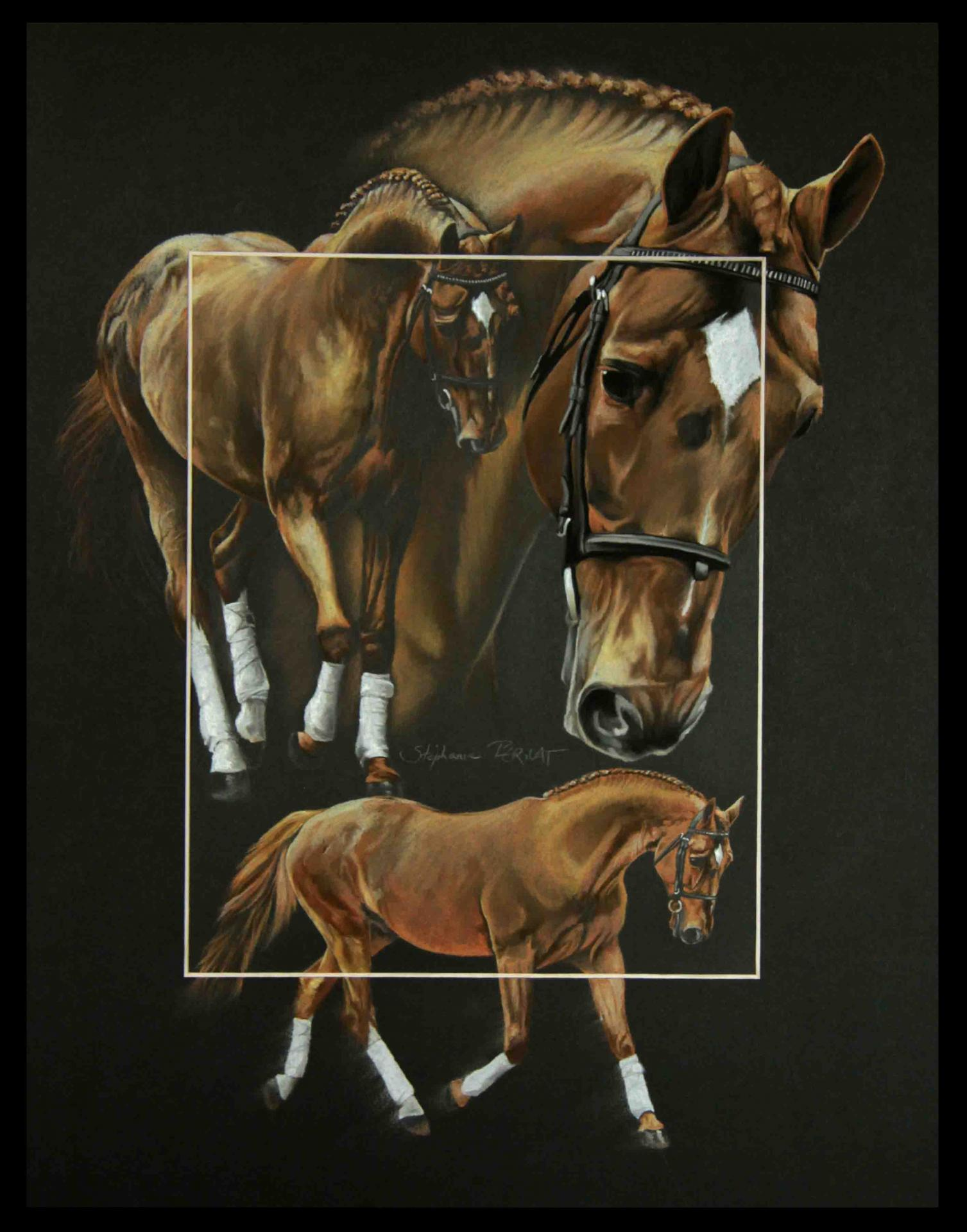 GOLDFEVER, ETALON PRIVE HANOVRIEN (private hanoverian stallion) - pastel sec (soft pastel) - 40x50cm