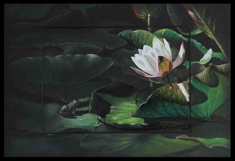 grenouille et nénuphar (frog) - pastel sec (soft pastel) - 20x30cm