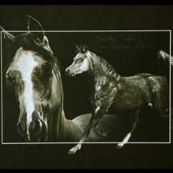 HARMATTAN THALYA (mare) - pastel sec (soft pastel) - 30x40cm