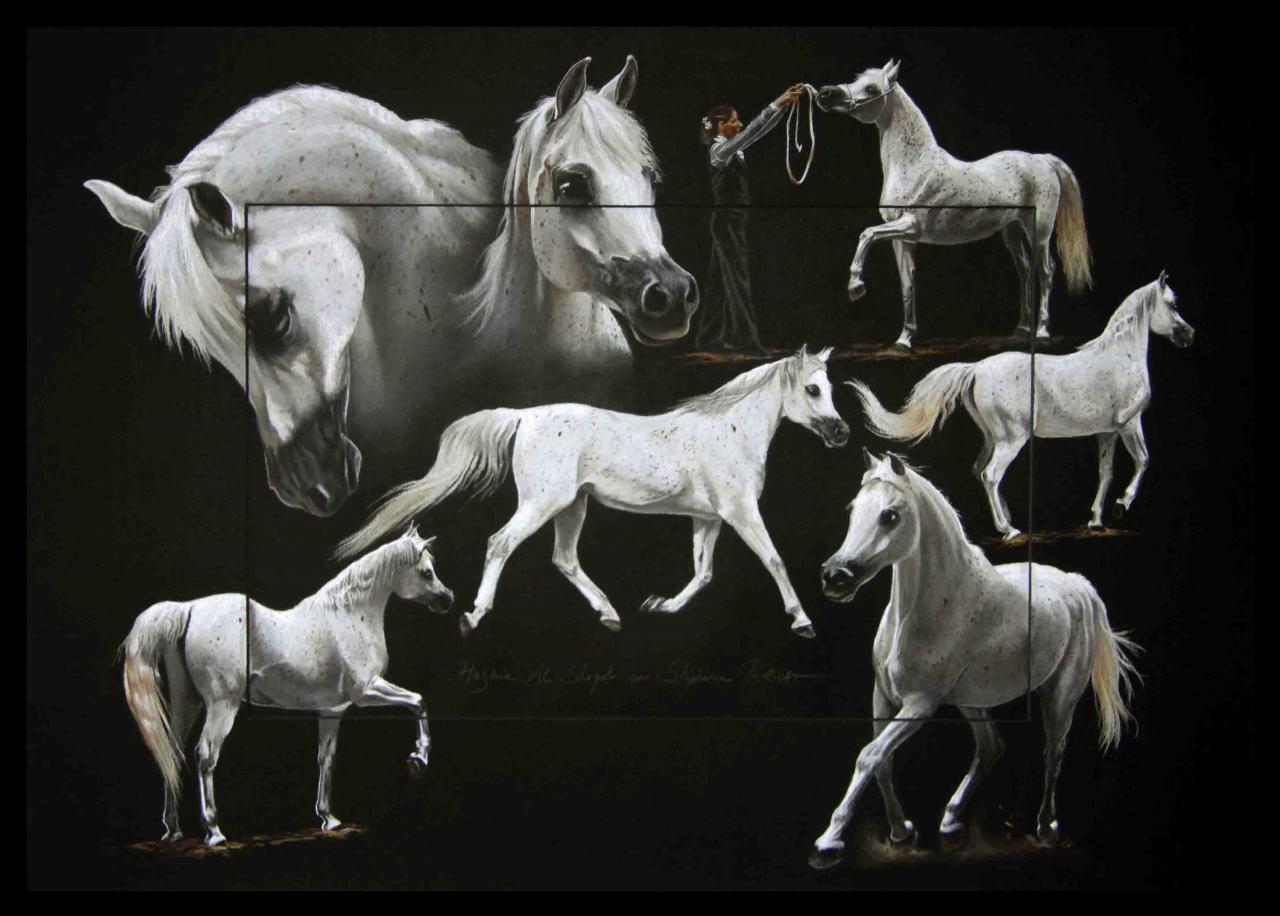 HAZMIA AL SHAQAB (arabian mare) - pastel sec (soft pastel) - 50x70cm - A V for sale