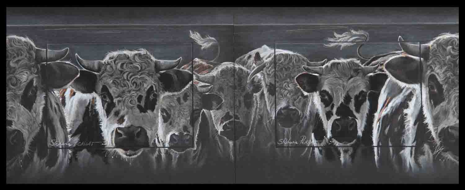 jeunes taureaux normands (young normans bulls) - autre possibilité diptyque (other possibility for diptych)