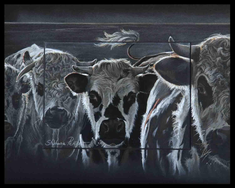 jeunes taureaux normands (youg normans bulls) - partie 1 (party 1)