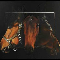 Kyo fire, standarbred mare - pastel sec - 24x30cm
