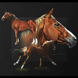 LAUDANUM, ETALON PRIVE (private stallion) - pastel sec (soft pastel) - 40x50cm - A V for sale