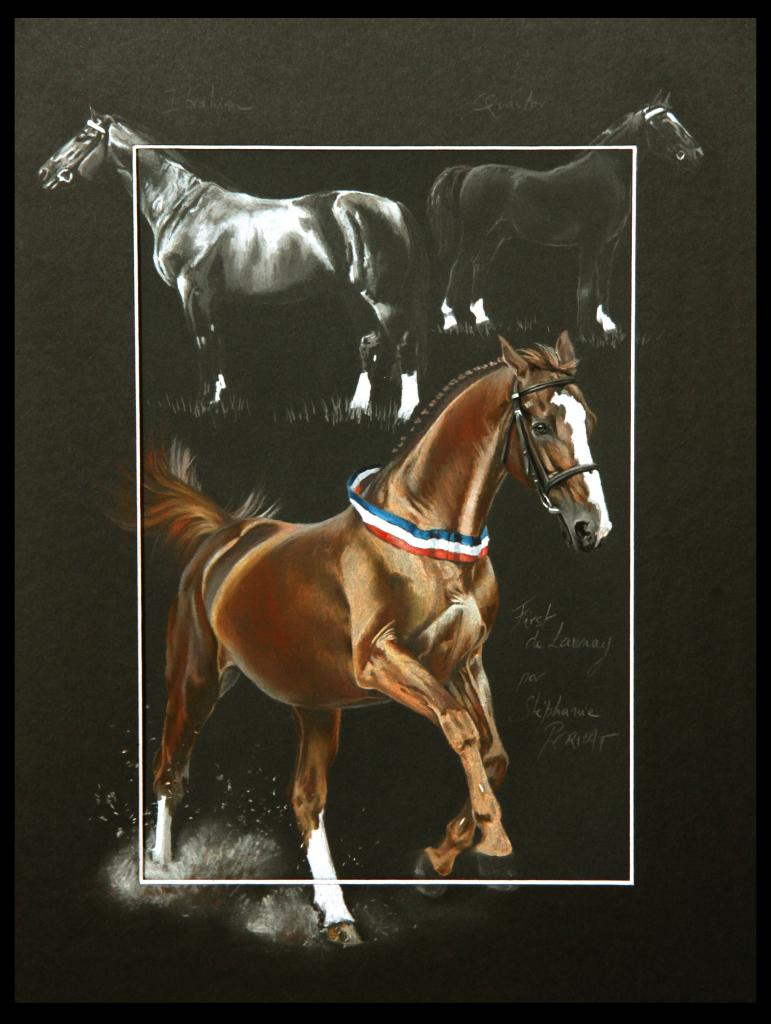 LIGNEE FIRST DE LAUNAY, ETALON NATIONAL (blood of first de launay, national stallion) -  30x40cm