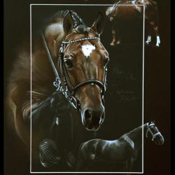 LIGNEE FLIPPER D'ELLE, ETALON NATIONAL (blood of flipper d'elle, national stallion) - 30x40cm