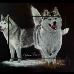 Luna, femelle husky - pastel sec (soft pastel) - 24x30cm - thank to owners for their trust