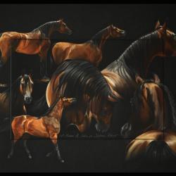 MARWAN AL SHAKIRA (mare) - pastel sec (soft pastel) - 50x70cm