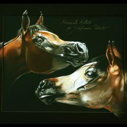 MIRWANAH KALLISTE (mare) - pastel sec (soft pastel) - 30x40cm