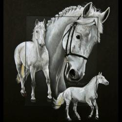ORIENT DU PY, ETALON ANGLO-ARABE (anglo-arabian private stallion) - pastel sec (soft pastel) - 40x50cm