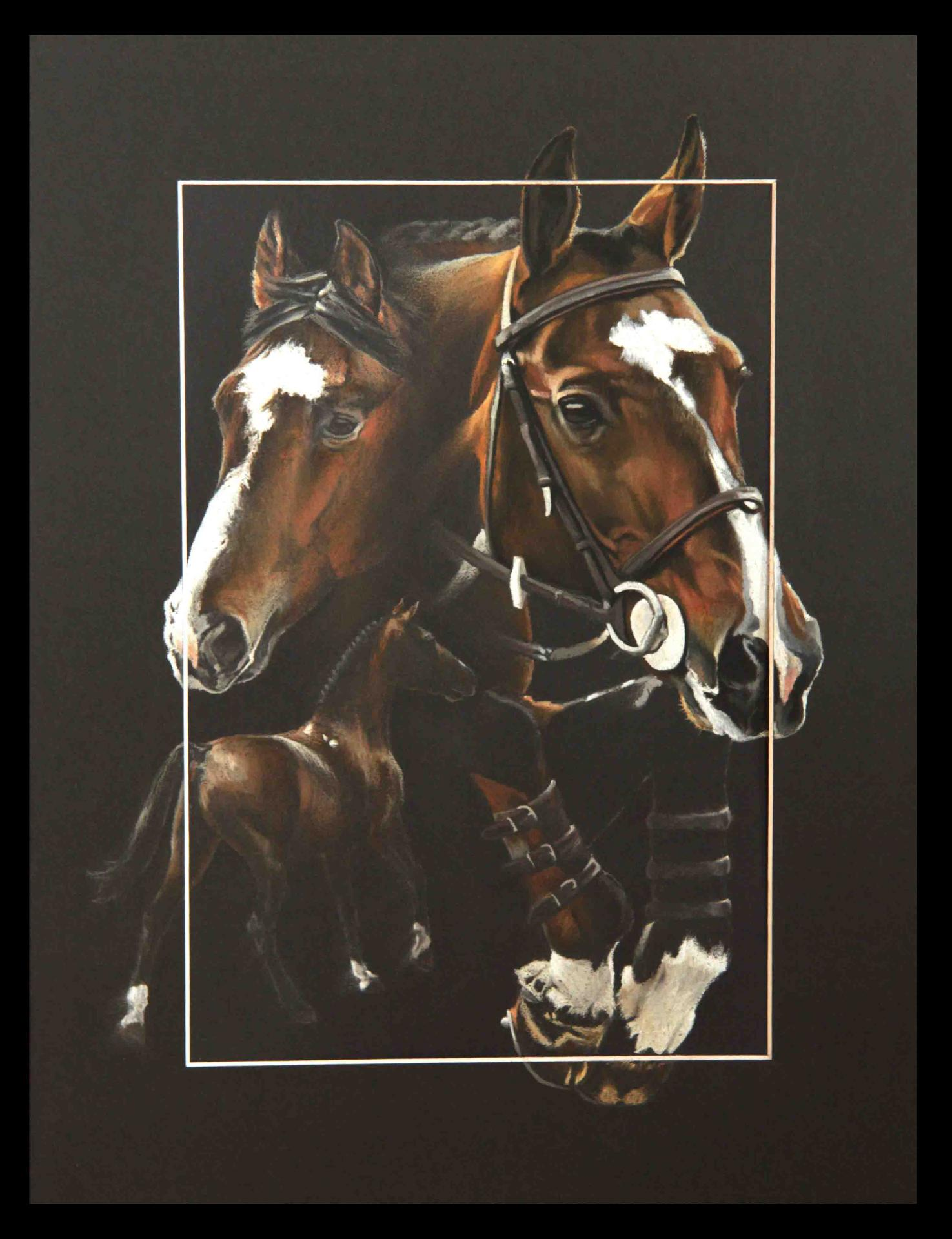 PAPILLON ROUGE, ETALON PRIVE (private stallion) -- 30x40cm
