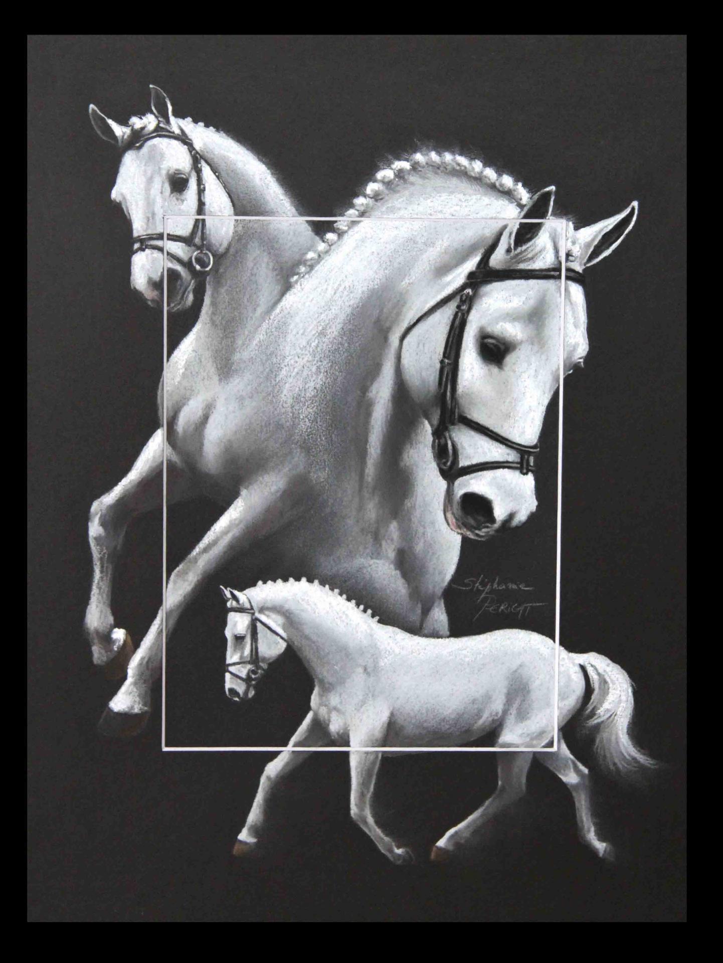 PRESIDENT, ETALON PRIVE (stallion private) - pastel sec (soft pastel) - 30x40cm