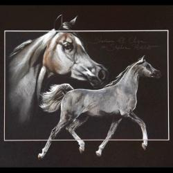SHARAAM EL CHIQUE (stallion) - pastel sec (soft pastel) - 30x40cm