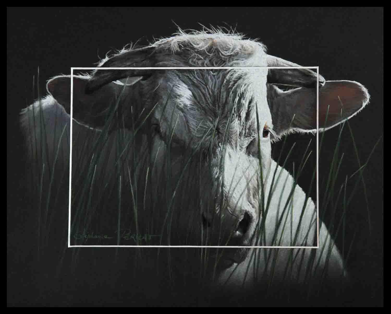 Taureau charolais dans les herbes (charolais bull in herbs) - pastel sec (soft pastel) - 24x30cm - AV for sale
