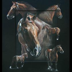 VOLAGE DU LYS, ETALON COB NORMAND (cob normand stallion) - pastel sec (soft pastel) - 40x50cm