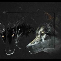 WOKWSES (loup en abénaki, tribue amérindienne - wolf in abenaki, indians of north america) -  24x30cm