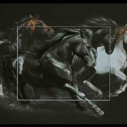 Galop originel - WAKIZA et autres races européennes (vendu - sold)